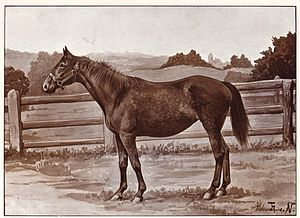 Anglo-Norman horse - An Anglo-Norman mare, 1904 book illustration from a painting by Thomas von Nathusius