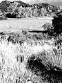 Two Ponds Trail B&W (14844613392).jpg