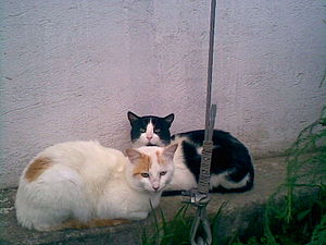 My two cats.