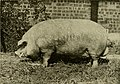 Types and market classes of live stock (1916) (14784150455).jpg