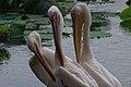 Ueno zoo, Tokyo, Japan (6155013428).jpg