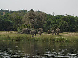 Murchison Falls National Park - Image: Uganda Murchison Falls Elephants