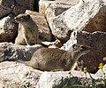 Uinta Ground Squirrels.jpg