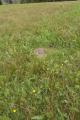 Ulrichstein Feldkruecken Am Melgershain NR 162171 Detail Pasture.png