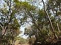 Umthunduluka (in Ndebele) (3276713890).jpg