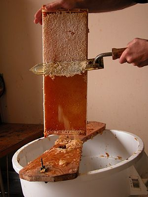 Honey extraction - Uncapping with an electric hot knife on an uncapping tub.