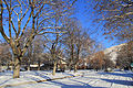 University District street with snow - Missoula, Montana.jpg