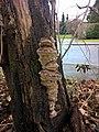 Unknown Mushroom (01).jpg