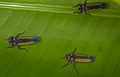 Unknown leafhopper (14521083141).jpg