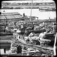 Unloading firewood from a barge 1903.JPG
