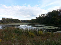 Upper Deckers Creek WMA.jpg