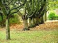 UrbanWoodland, School Aycliffe - geograph.org.uk - 382054.jpg