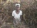 Use of Aloe dawei by Berta Nkura (4624207988).jpg