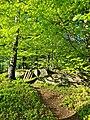 Vårskog i Biskopstorp Halmstad.jpg