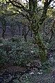 Vegetación en el Sendero de La Sauceda.jpg