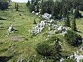 Velebit Botany Garden 01.jpg