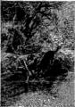 Verne - P'tit-bonhomme, Hetzel, 1906, Ill. page 320.png