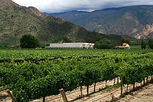 New World wine - Vineyard in Cafayate, Argentina