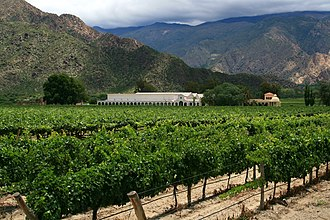 Agriculture in Argentina - A vineyard in Salta Province.