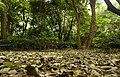 View From Leaf Litter (198089625).jpeg
