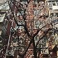 View of Beijing 20170318.jpg