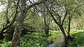 Vilalba rio Madalena 01.jpg