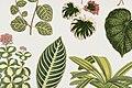 Vintage illustrations by Benjamin Fawcett for Shirley Hibberd digitally enhanced by rawpixel 35.jpg