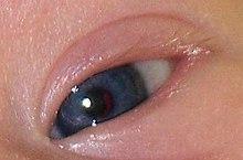 глаза темно синие фото