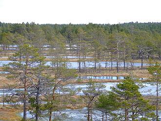 Lahemaa National Park - Image: Viru Bog