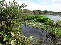 Wakodahatchee Wetlands pic.aaa9026.jpg