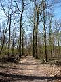 Wald bei Hassloch 01.JPG