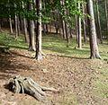 Waldstück im Kurpfalz-Park - panoramio.jpg