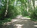 Waldweg bei Rankendorf - geo.hlipp.de - 13982.jpg