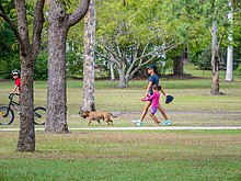A child rides a bicycle. An adult and a child walk a dog along a path in a green park..