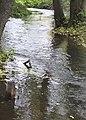 Wartka rynna nizinnej rzeki.jpg