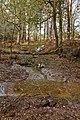 Warwickslade Cutting, a tributary flows - geograph.org.uk - 1584523.jpg