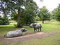 Water Buffalo Standing and Lying,Yorkshire Sculpture Park - geograph.org.uk - 54571.jpg