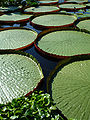 Water Lily pads view.jpg