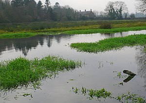 Puddletown - Old watermeadows on the River Piddle northwest of Puddletown at Druce Farm