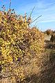 Weingarten im Herbst 5617.JPG