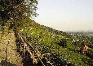 Saxony (wine region) - A footpath through vineyards in the village Pillnitz in Saxony.