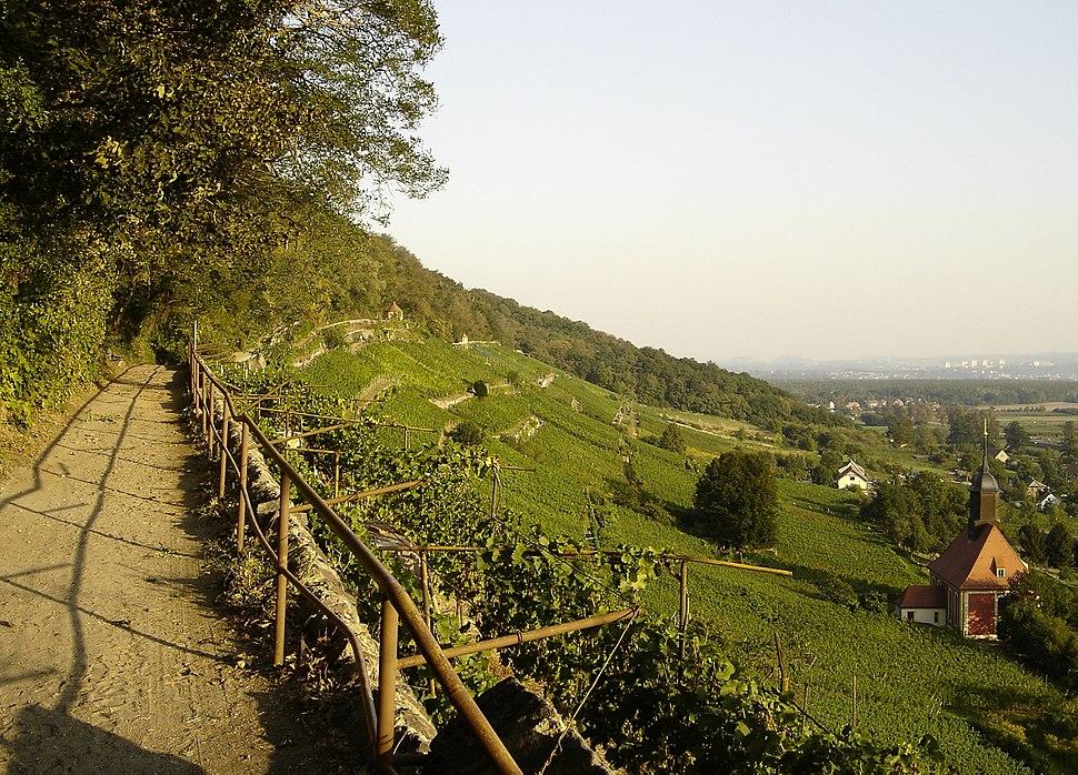 Weinwanderweg Pillnitz