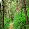 Weiser State Forest Walking Path.jpg