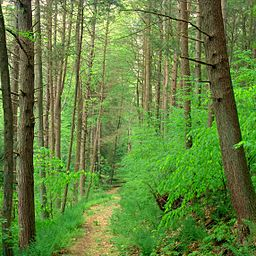 Weiser State Forest Walking Path.jpg