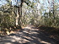 Wescott Road (Edisto Island) 3.JPG