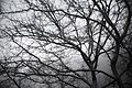 White forest.JPG