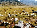 White poofy things in field Lille Malene hike near Nuuk Greenland.jpg