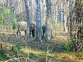 Wildlife's @ Wayanad Wildlife Sanctuary, Muthanga Range - panoramio (7).jpg