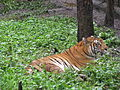 Wildlife Safari - 8.jpg