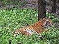 Wildlife Safari - 8.jpg